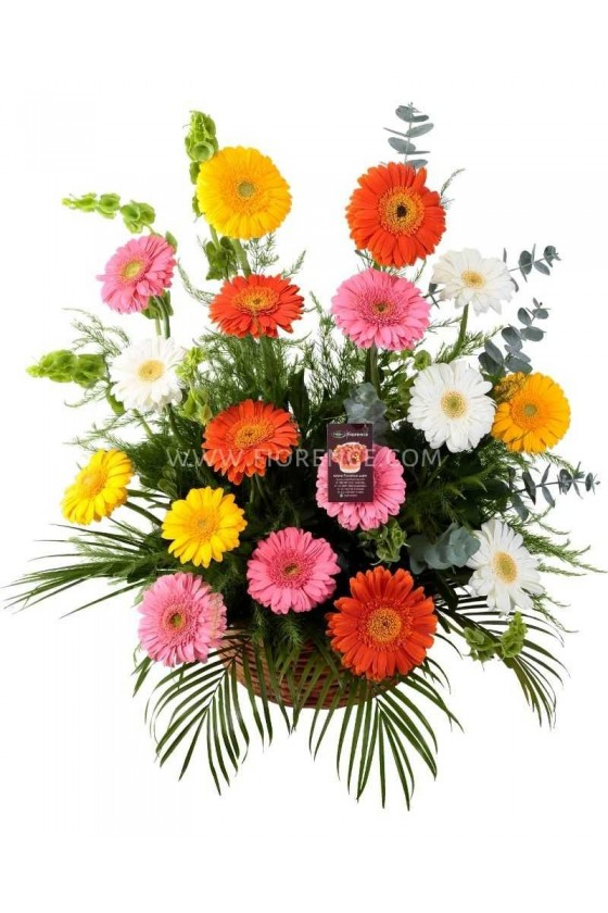 Flowers Gerberas Basket