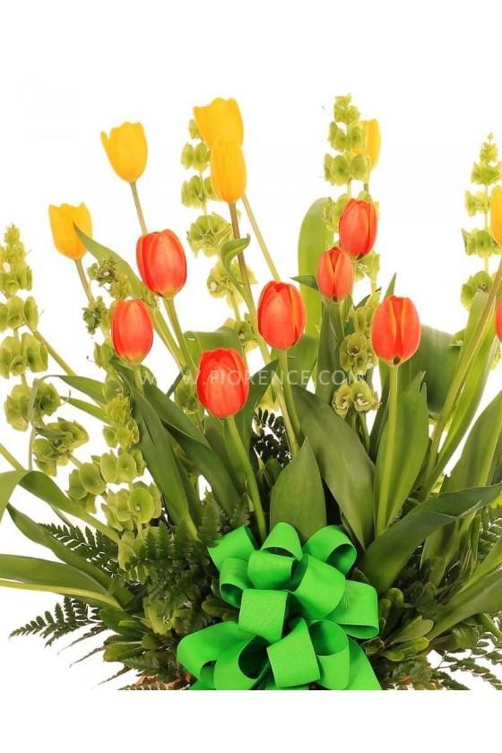 Tulips Magic